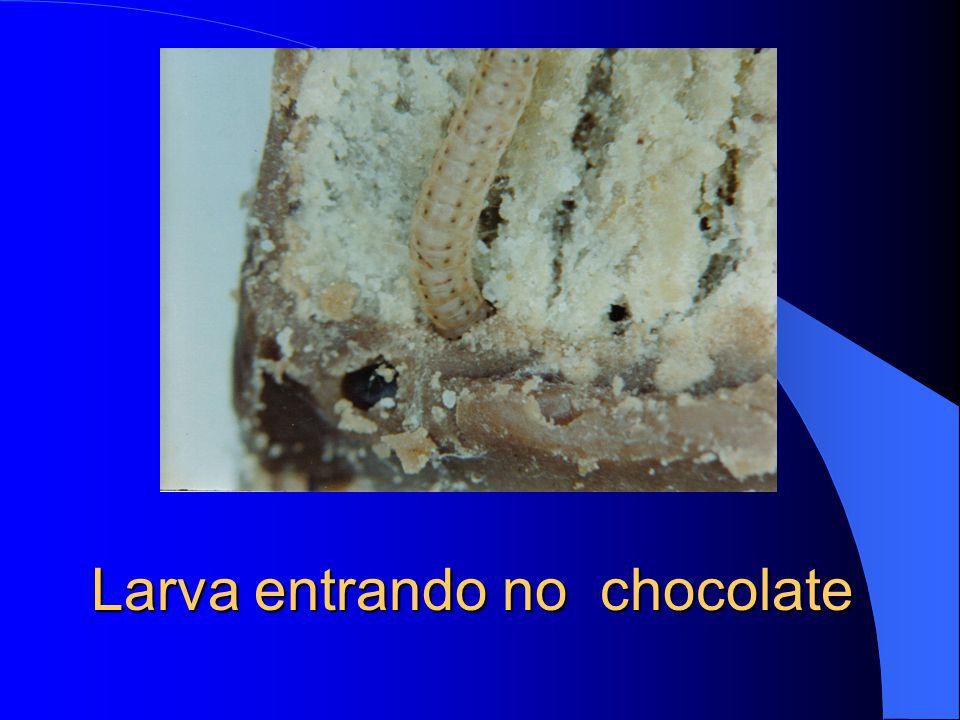 Larva em chocolate