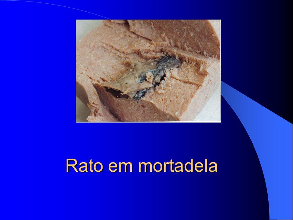Detalhe da boca do rato que estava no queijo
