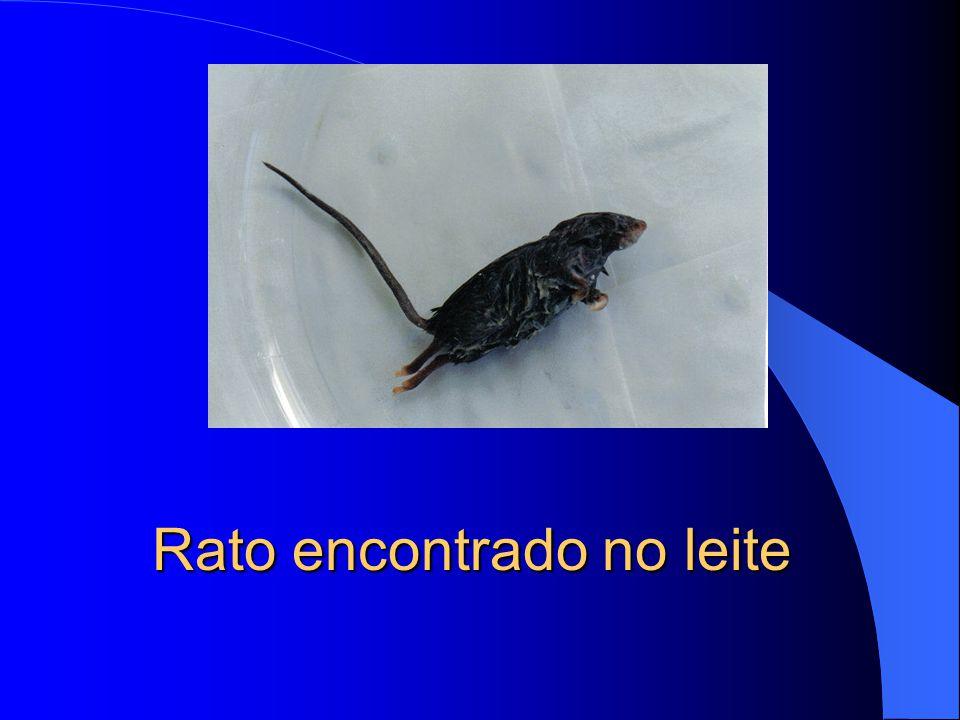 Marcação no corpo do rato.