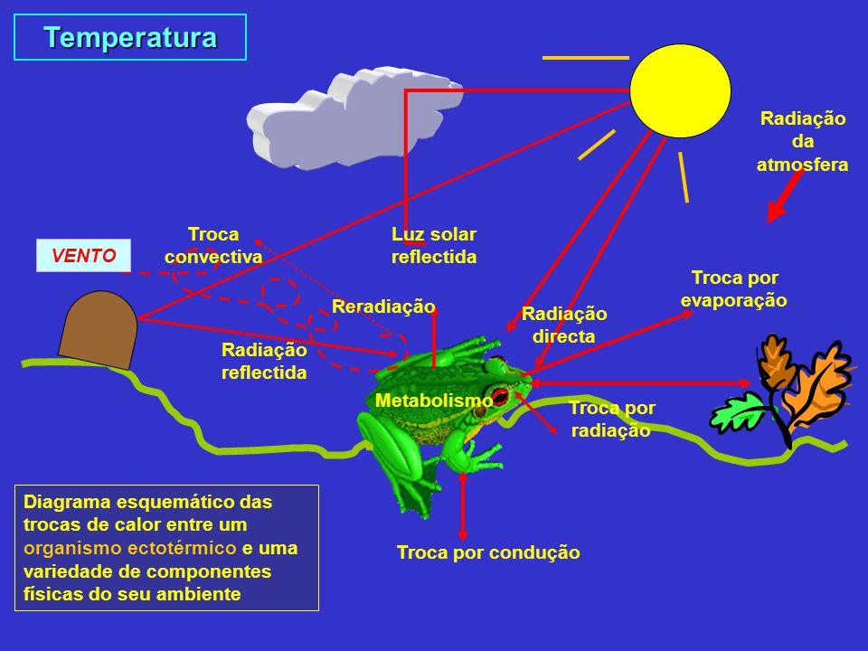 Temperatura Luz solar reflectida Metabolismo Troca por condução Radiação directa Radiação reflectida Troca por radiação Troca por evaporação Reradiaçã