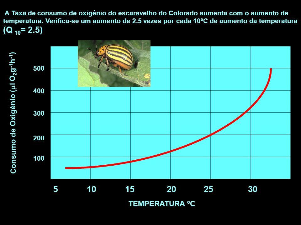 5 10 15 2025 30 TEMPERATURA ºC Consumo de Oxigénio (  l O 2 g -1 h -1 ) 500 400 300 200 100 A Taxa de consumo de oxigénio do escaravelho do Colorado