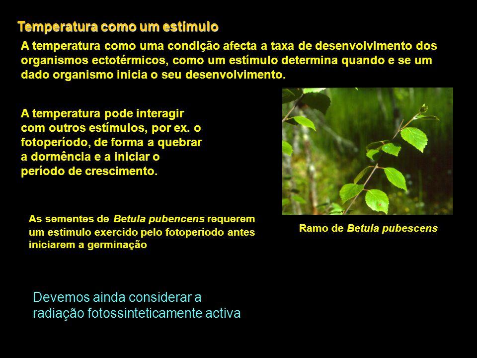 Temperatura como um estímulo A temperatura como uma condição afecta a taxa de desenvolvimento dos organismos ectotérmicos, como um estímulo determina