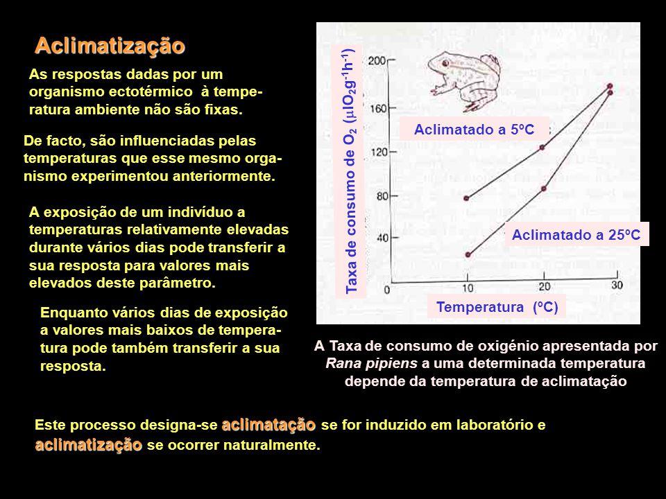 Aclimatização Temperatura (ºC) Aclimatado a 25ºC Aclimatado a 5ºC Taxa de consumo de O 2 (  lO 2 g -1 h -1 ) As respostas dadas por um organismo ecto