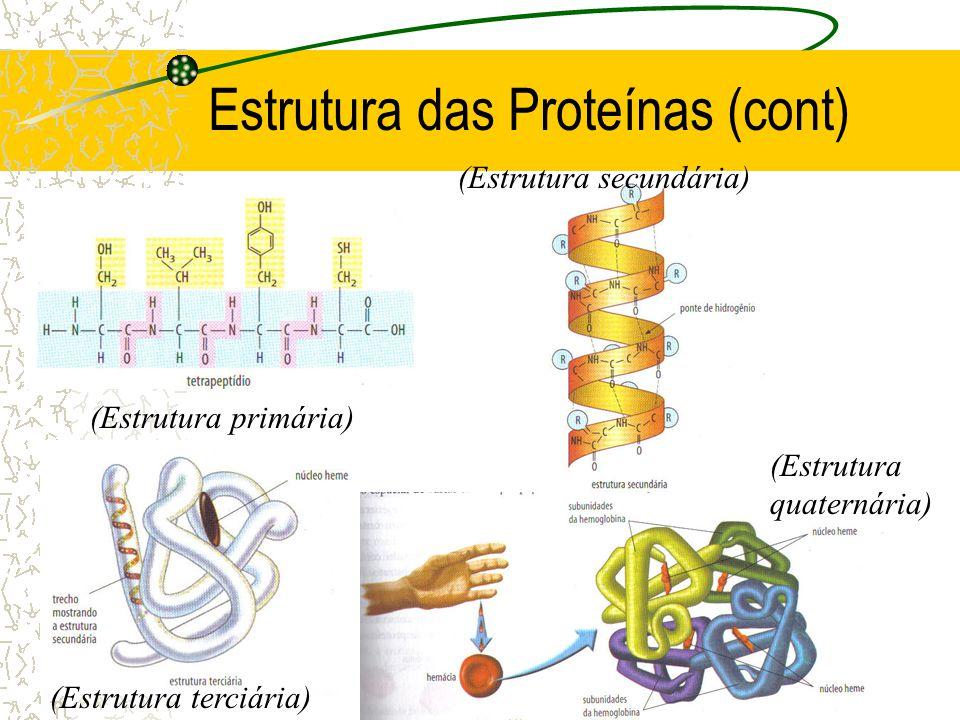 Estrutura das Proteínas (cont) (Estrutura primária) (Estrutura terciária) (Estrutura secundária) (Estrutura quaternária)