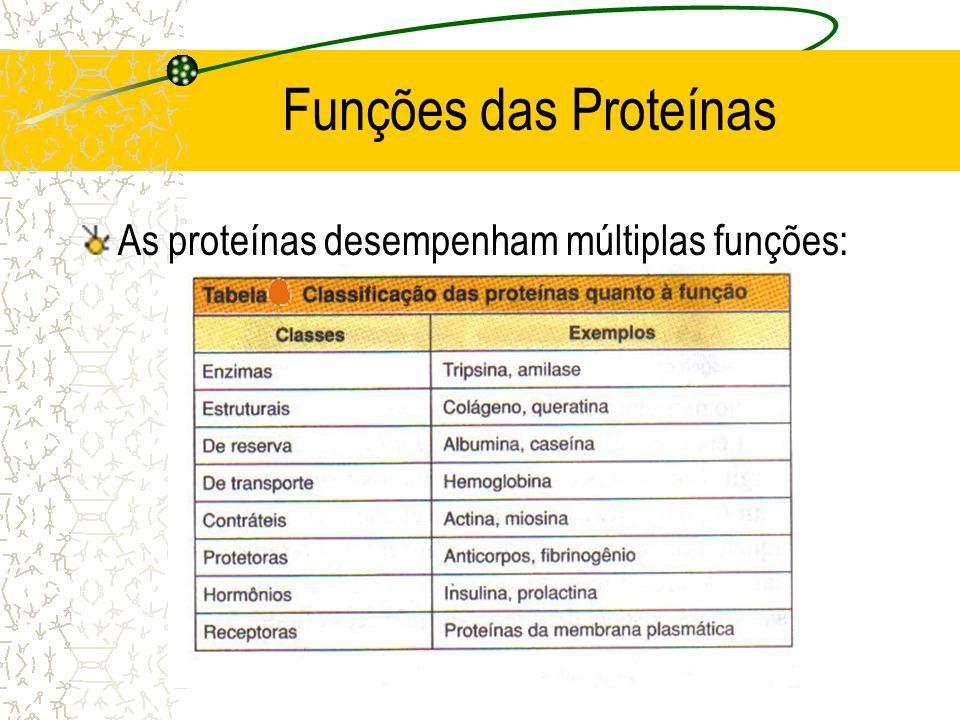 Funções das Proteínas As proteínas desempenham múltiplas funções: