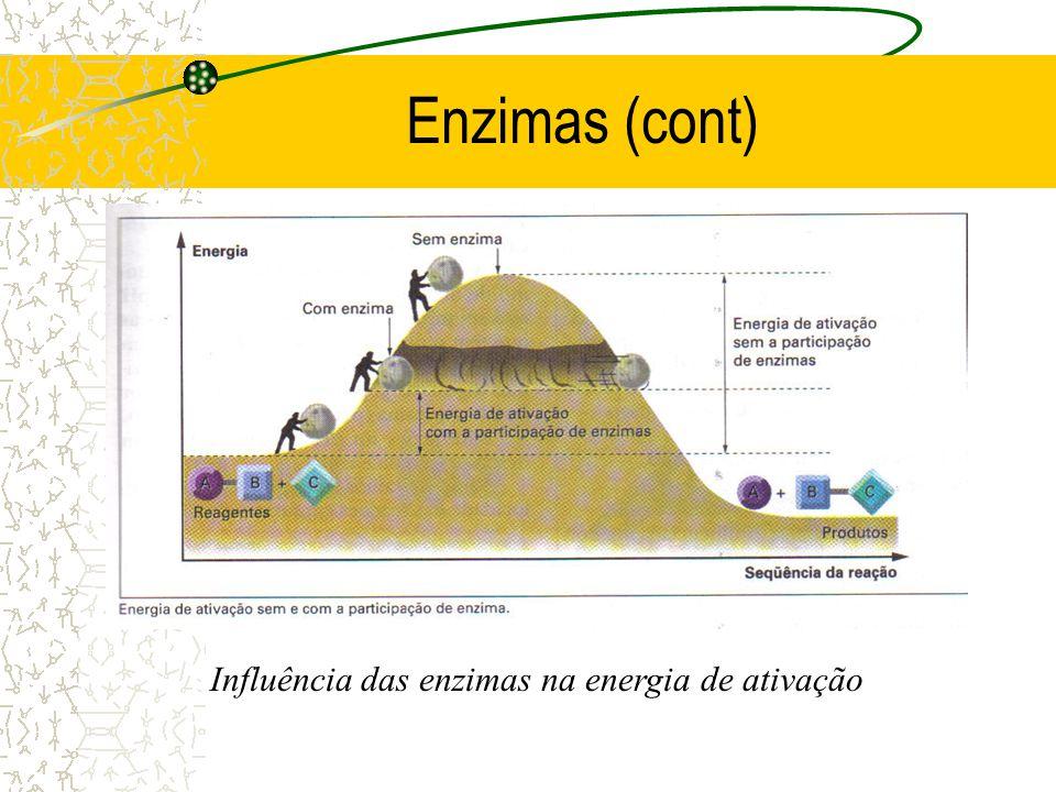 Enzimas (cont) Influência das enzimas na energia de ativação