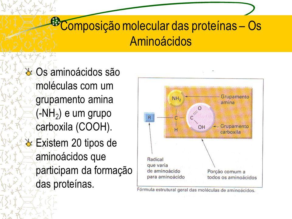 Composição molecular das proteínas – Os Aminoácidos Os aminoácidos são moléculas com um grupamento amina (-NH 2 ) e um grupo carboxila (COOH). Existem
