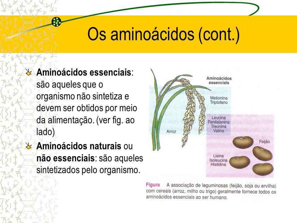 Os aminoácidos (cont.) Aminoácidos essenciais : são aqueles que o organismo não sintetiza e devem ser obtidos por meio da alimentação. (ver fig. ao la