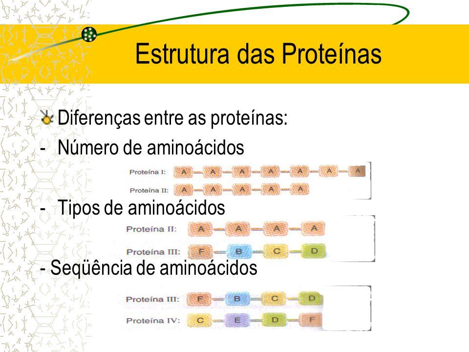 Estrutura das Proteínas Diferenças entre as proteínas: -Número de aminoácidos -Tipos de aminoácidos - Seqüência de aminoácidos