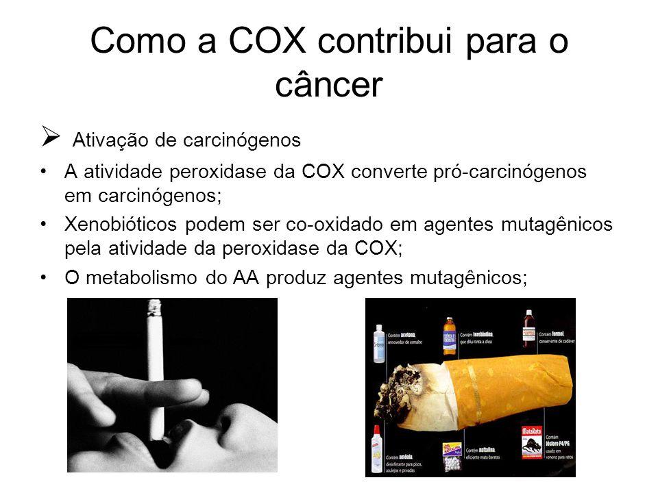 Como a COX contribui para o câncer  Ativação de carcinógenos A atividade peroxidase da COX converte pró-carcinógenos em carcinógenos; Xenobióticos po