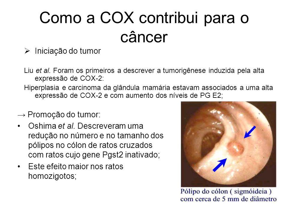 Como a COX contribui para o câncer → Promoção do tumor: Oshima et al. Descreveram uma redução no número e no tamanho dos pólipos no cólon de ratos cru