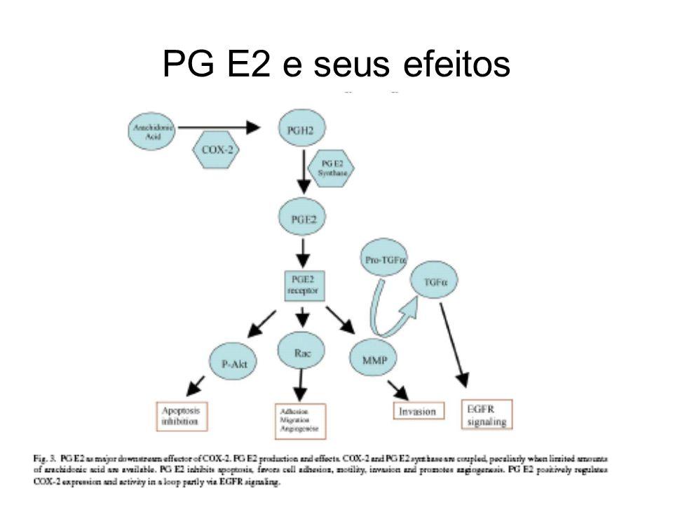 PG E2 e seus efeitos