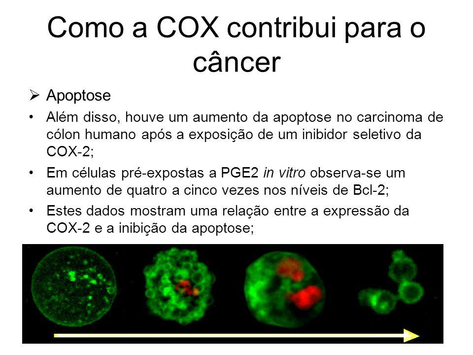Como a COX contribui para o câncer  Apoptose Além disso, houve um aumento da apoptose no carcinoma de cólon humano após a exposição de um inibidor se