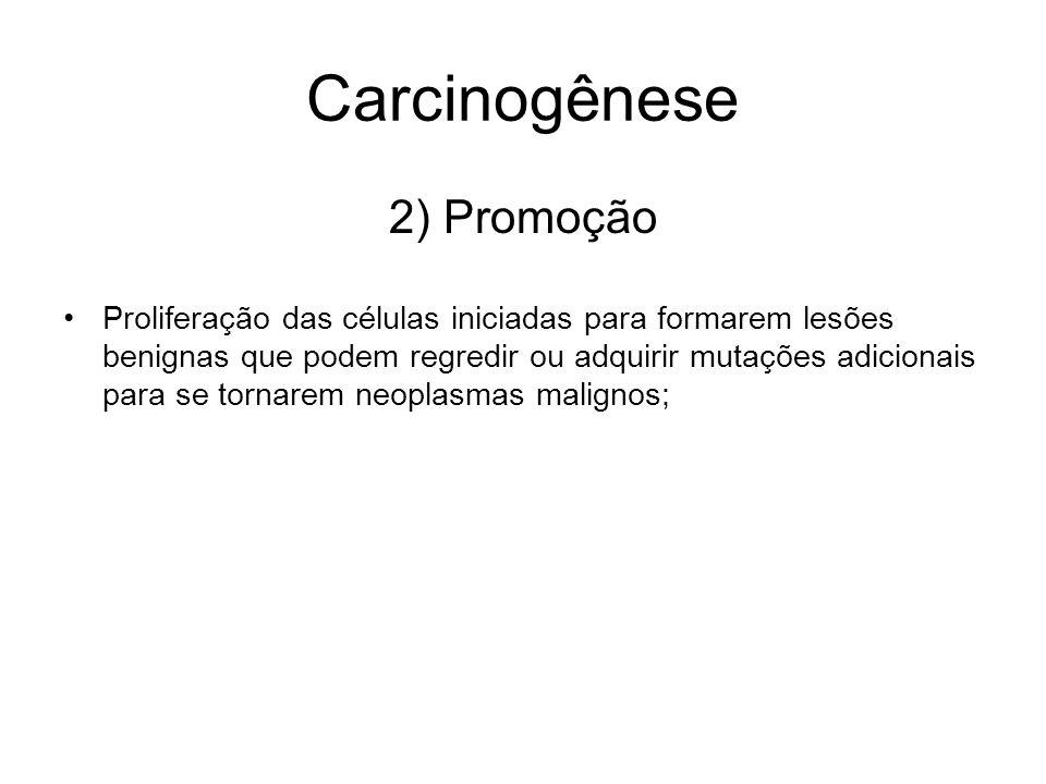 Carcinogênese 2) Promoção Proliferação das células iniciadas para formarem lesões benignas que podem regredir ou adquirir mutações adicionais para se