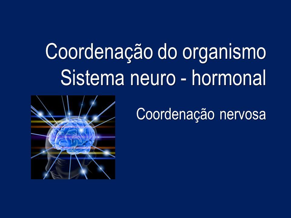 Sistema neuro-hormonal O bom funcionamento do organismo humano depende de todas as actividades realizadas pelos órgãos, tecidos e células.