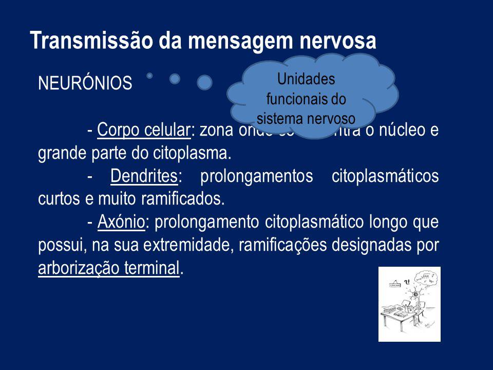 Transmissão da mensagem nervosa NEURÓNIOS