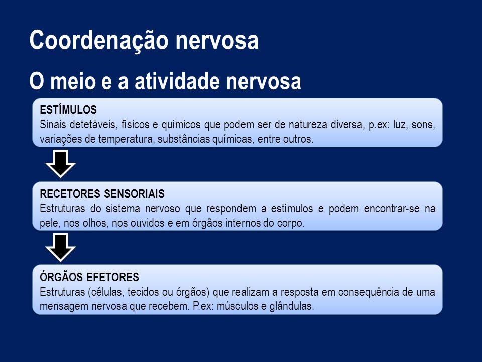 Coordenação nervosa O meio e a atividade nervosa Estímulo.