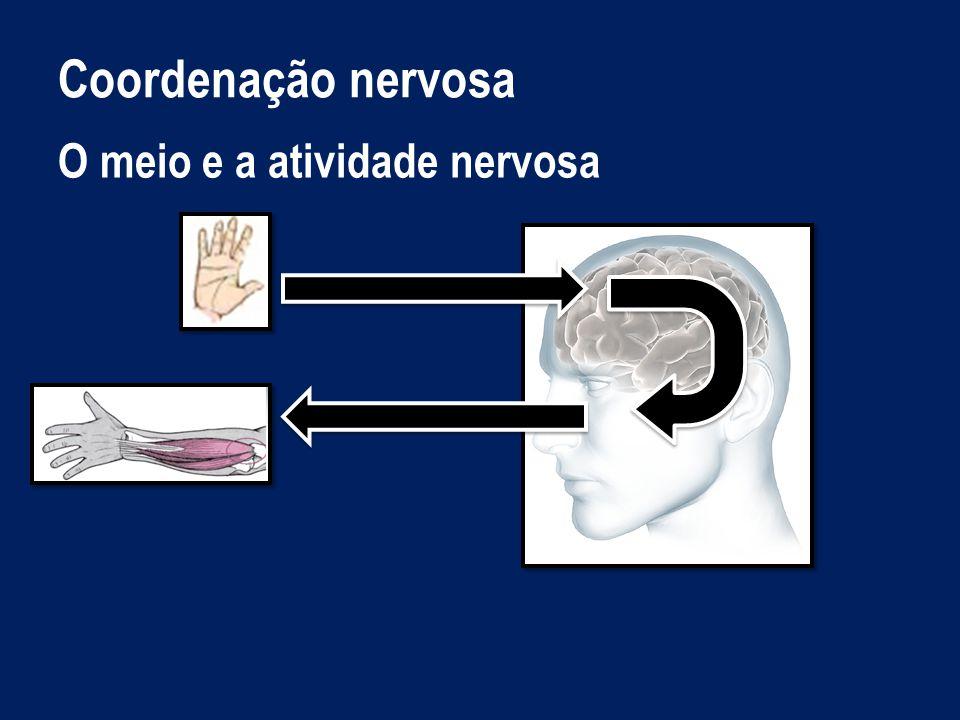 Coordenação nervosa Organização do sistema nervoso Sistema Nervoso Sistema Nervoso Central (SNC) Encéfalo Cérebro Cerebelo Bolbo raquidiano Medula Espinal Sistema Nervoso Periférico (SNP) Nervos Gânglios nervosos