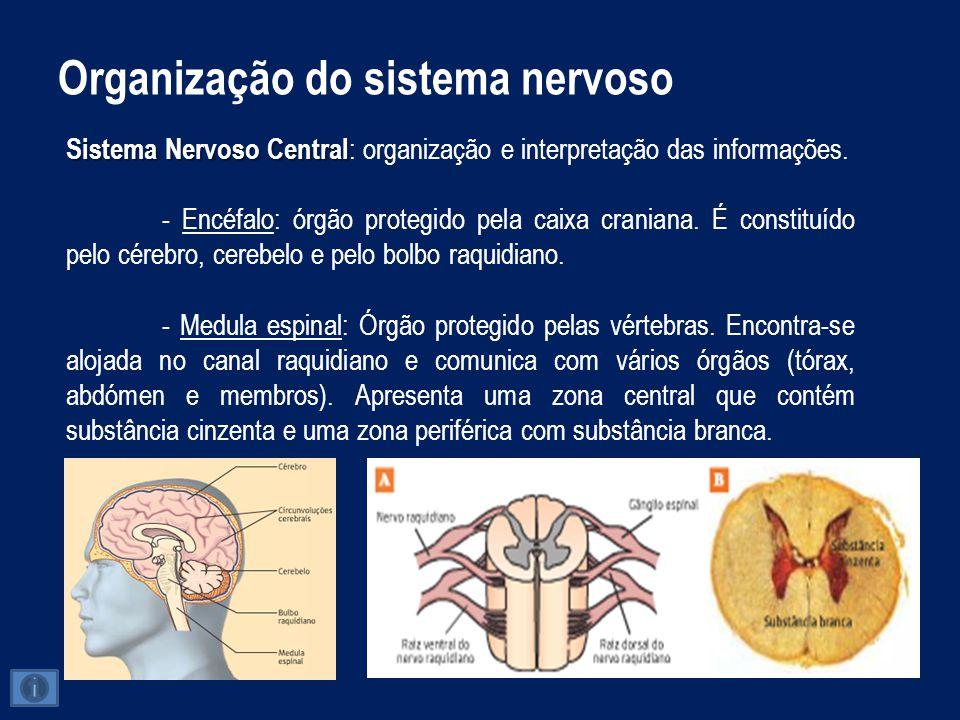 Organização do sistema nervoso Encéfalo - Cérebro: É a zona mais volumosa do encéfalo humano.