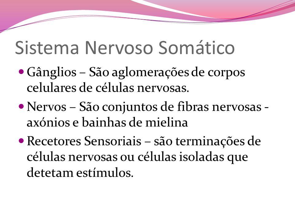 Sistema Nervoso Somático Gânglios – São aglomerações de corpos celulares de células nervosas.