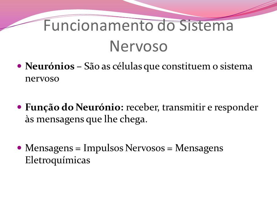 Funcionamento do Sistema Nervoso Neurónios – São as células que constituem o sistema nervoso Função do Neurónio: receber, transmitir e responder às mensagens que lhe chega.