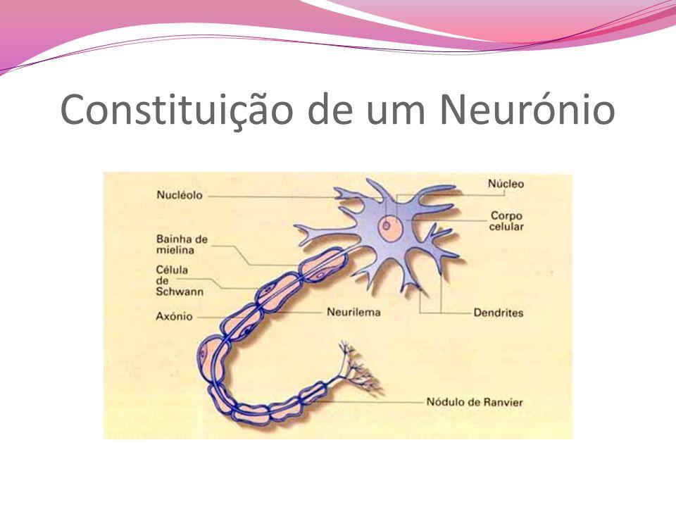 Constituição de um Neurónio