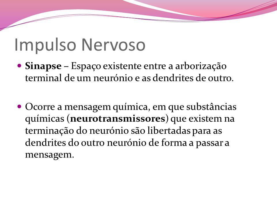 Impulso Nervoso Sinapse – Espaço existente entre a arborização terminal de um neurónio e as dendrites de outro.
