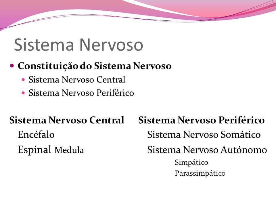 Constituição do Sistema Nervoso Sistema Nervoso Central Sistema Nervoso Periférico Encéfalo (protegida pelas meninges e pelo crânio) Cérebro Cerebelo Bolbo Raquidiano Espinal Medula (protegida pela coluna vertebral) Sistema Nervoso Somático Recetores Sensoriais Gânglios Nervos Raquidianos - partem da espinal medula e ramificam-se por todo o organismo.