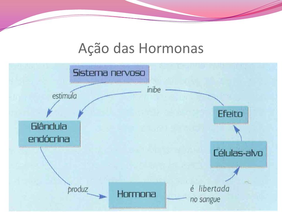 Ação das Hormonas