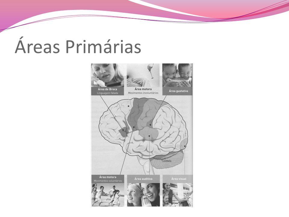 Sistema Nervoso Periférico Sistema Nervoso Somático Sistema Nervoso Autónomo Coordena as funções que nos relacionam com o meio externo (movimentos voluntários, por exemplo ) Coordena as funções de vida autónoma (digestão e respiração, por exemplo).