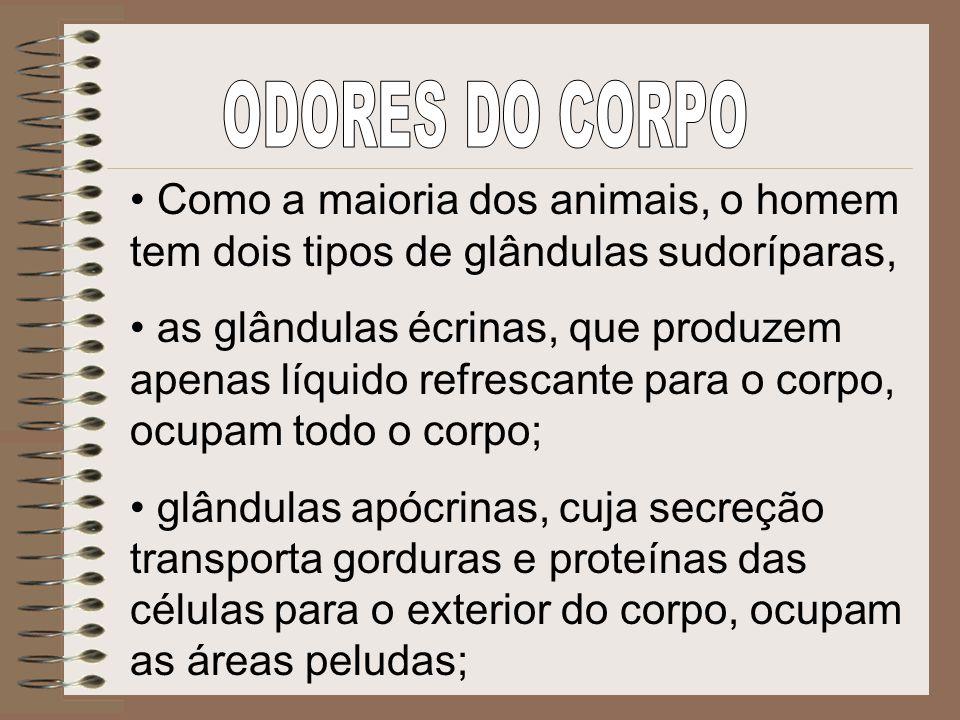 Como a maioria dos animais, o homem tem dois tipos de glândulas sudoríparas, as glândulas écrinas, que produzem apenas líquido refrescante para o corp