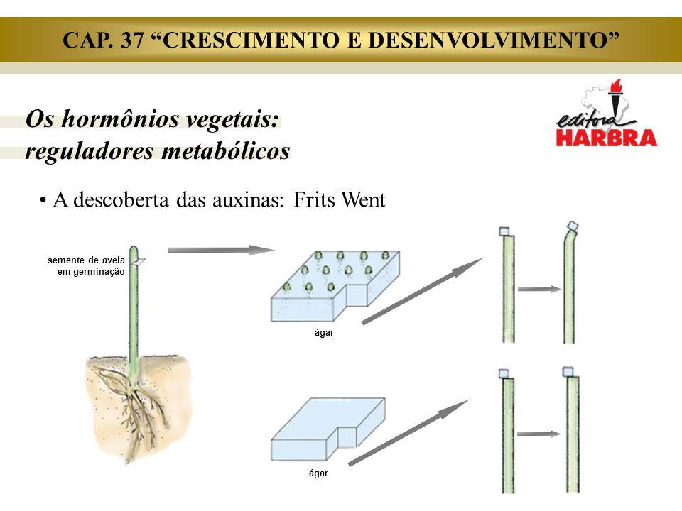 """Os hormônios vegetais: reguladores metabólicos A descoberta das auxinas: Frits Went ágar semente de aveia em germinação ágar CAP. 37 """"CRESCIMENTO E DE"""