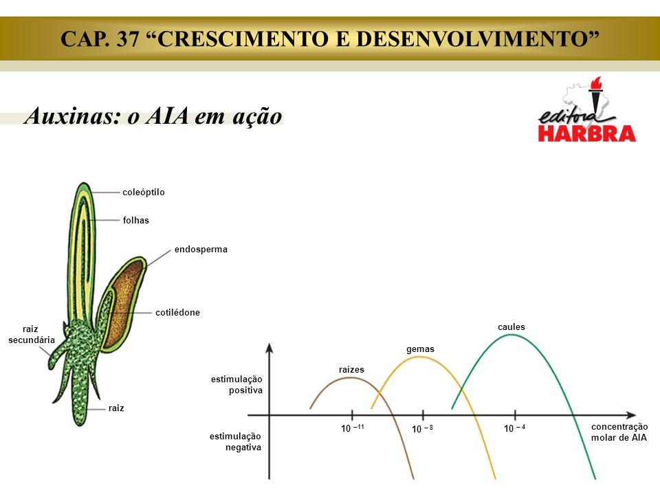 Auxinas: o AIA em ação estimulação positiva estimulação negativa raízes gemas caules concentração molar de AIA 10  11 10  8 10  4 coleóptilo folhas