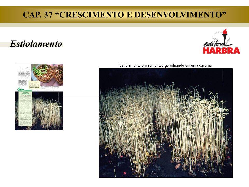 """Estiolamento CAP. 37 """"CRESCIMENTO E DESENVOLVIMENTO"""" Estiolamento em sementes germinando em uma caverna"""