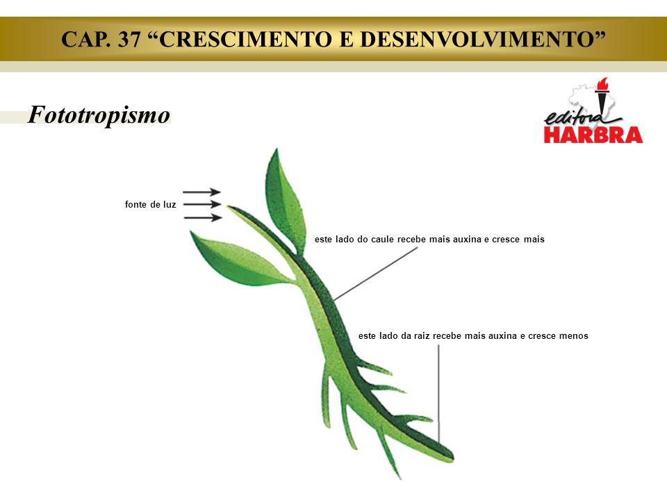 """Fototropismo fonte de luz este lado do caule recebe mais auxina e cresce mais este lado da raiz recebe mais auxina e cresce menos CAP. 37 """"CRESCIMENTO"""