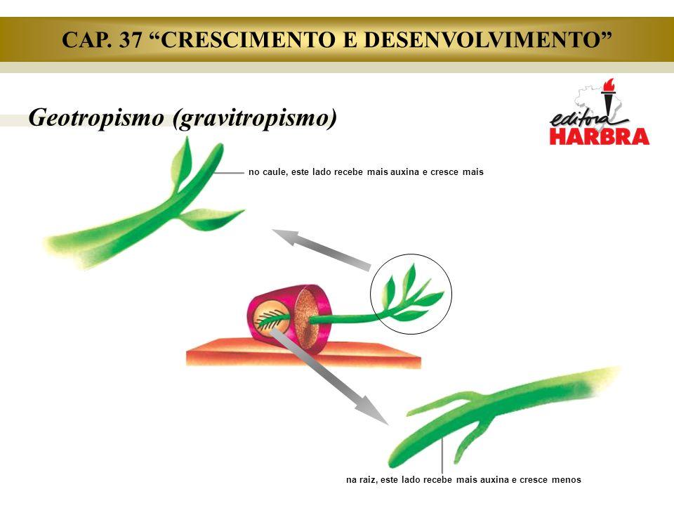 """Geotropismo (gravitropismo) na raiz, este lado recebe mais auxina e cresce menos no caule, este lado recebe mais auxina e cresce mais CAP. 37 """"CRESCIM"""