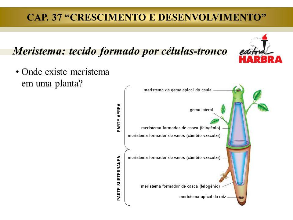 Meristema: tecido formado por células-tronco Onde existe meristema em uma planta? PARTE AÉREA PARTE SUBTERRÂNEA meristema da gema apical do caule gema