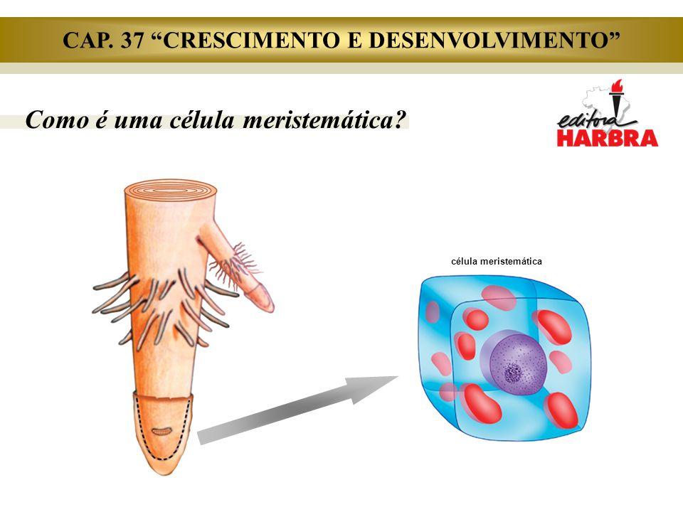 """Como é uma célula meristemática? célula meristemática CAP. 37 """"CRESCIMENTO E DESENVOLVIMENTO"""""""