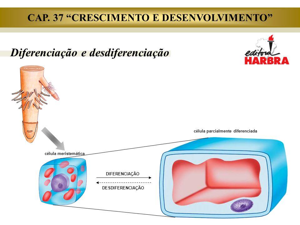 """Diferenciação e desdiferenciação célula meristemática célula parcialmente diferenciada DIFERENCIAÇÃO DESDIFERENCIAÇÃO CAP. 37 """"CRESCIMENTO E DESENVOLV"""
