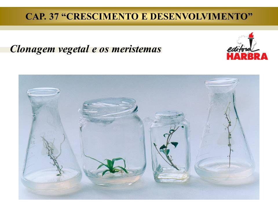 """Clonagem vegetal e os meristemas CAP. 37 """"CRESCIMENTO E DESENVOLVIMENTO"""""""