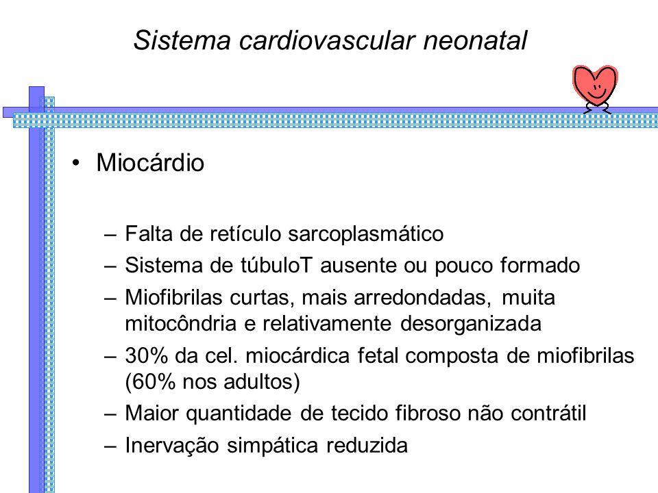 Sistema cardiovascular neonatal Miocárdio –Falta de retículo sarcoplasmático –Sistema de túbuloT ausente ou pouco formado –Miofibrilas curtas, mais arredondadas, muita mitocôndria e relativamente desorganizada –30% da cel.