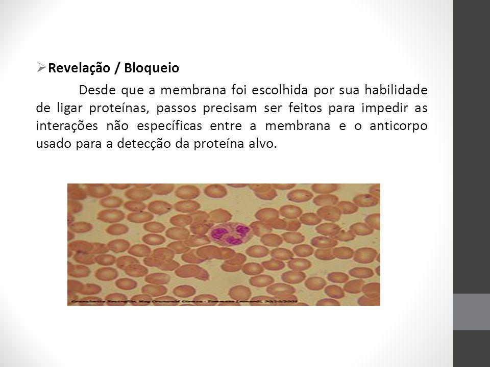  Revelação / Bloqueio Desde que a membrana foi escolhida por sua habilidade de ligar proteínas, passos precisam ser feitos para impedir as interações