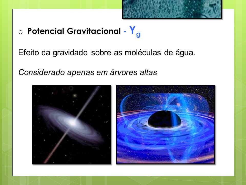 o Potencial Gravitacional - Y g Efeito da gravidade sobre as moléculas de água. Considerado apenas em árvores altas