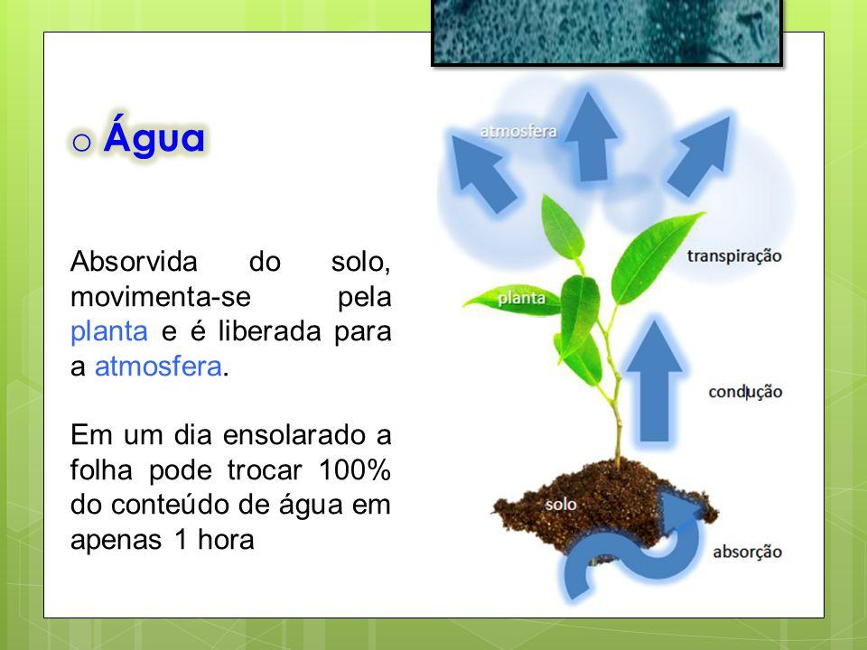 o Potencial da Água - Y w Diferença entre a energia livre da água de um sistema e a energia livre da água pura.
