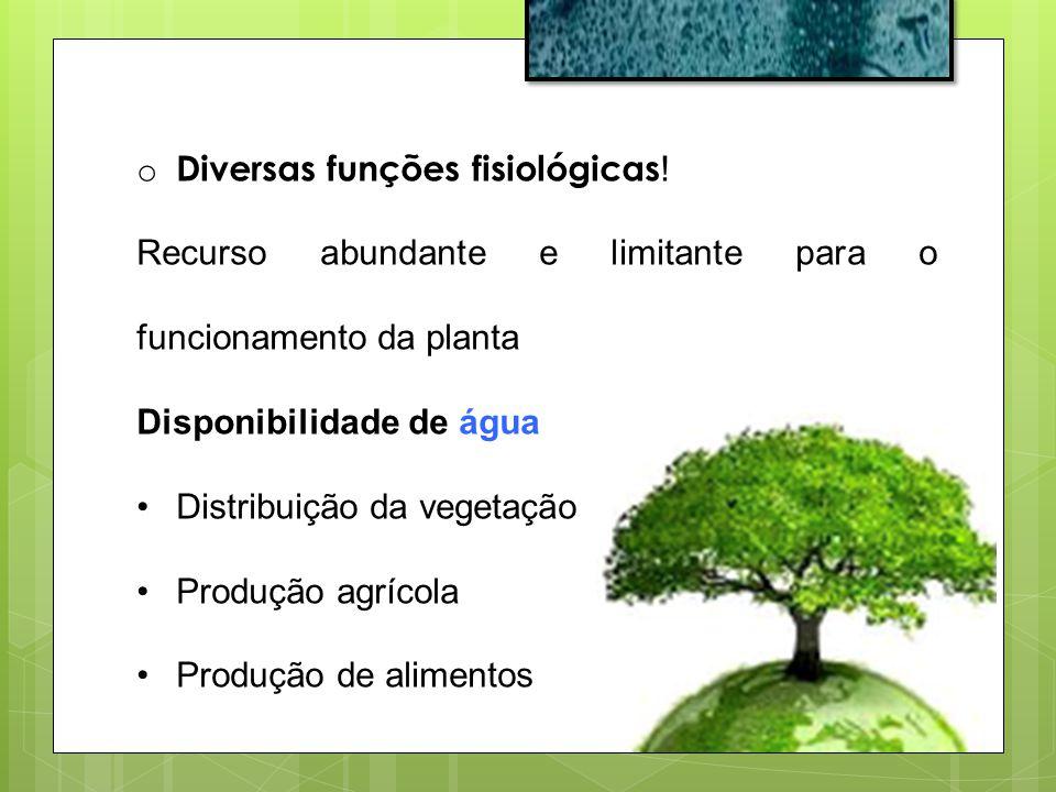 o Diversas funções fisiológicas ! Recurso abundante e limitante para o funcionamento da planta Disponibilidade de água Distribuição da vegetação Produ