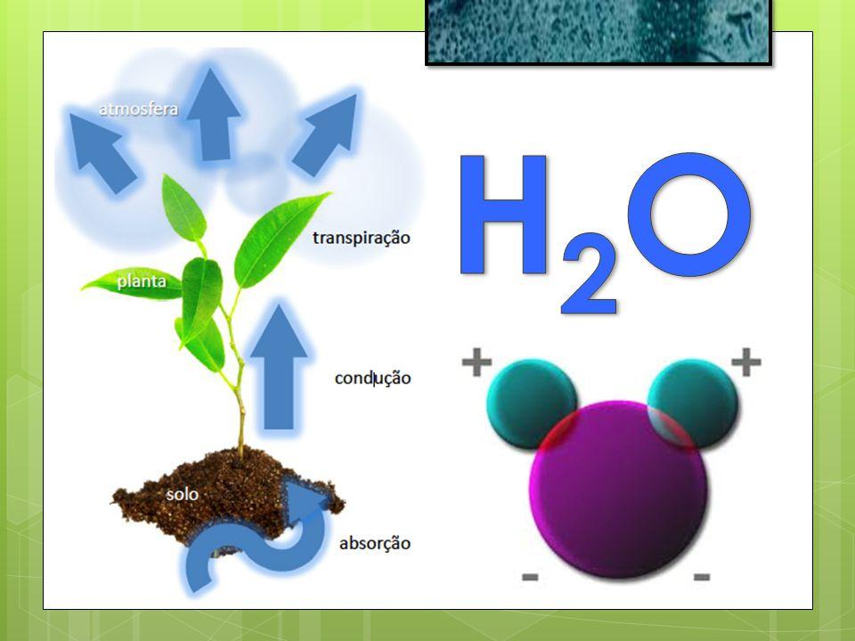 o Potencial Gravitacional - Y g Efeito da gravidade sobre as moléculas de água.
