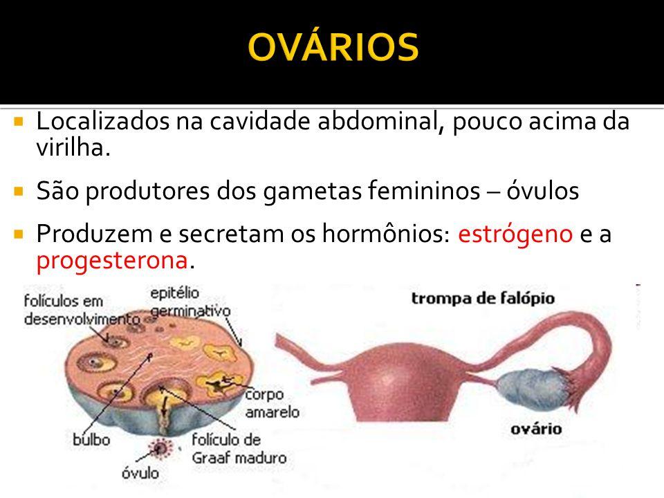  Localizados na cavidade abdominal, pouco acima da virilha.  São produtores dos gametas femininos – óvulos  Produzem e secretam os hormônios: estró