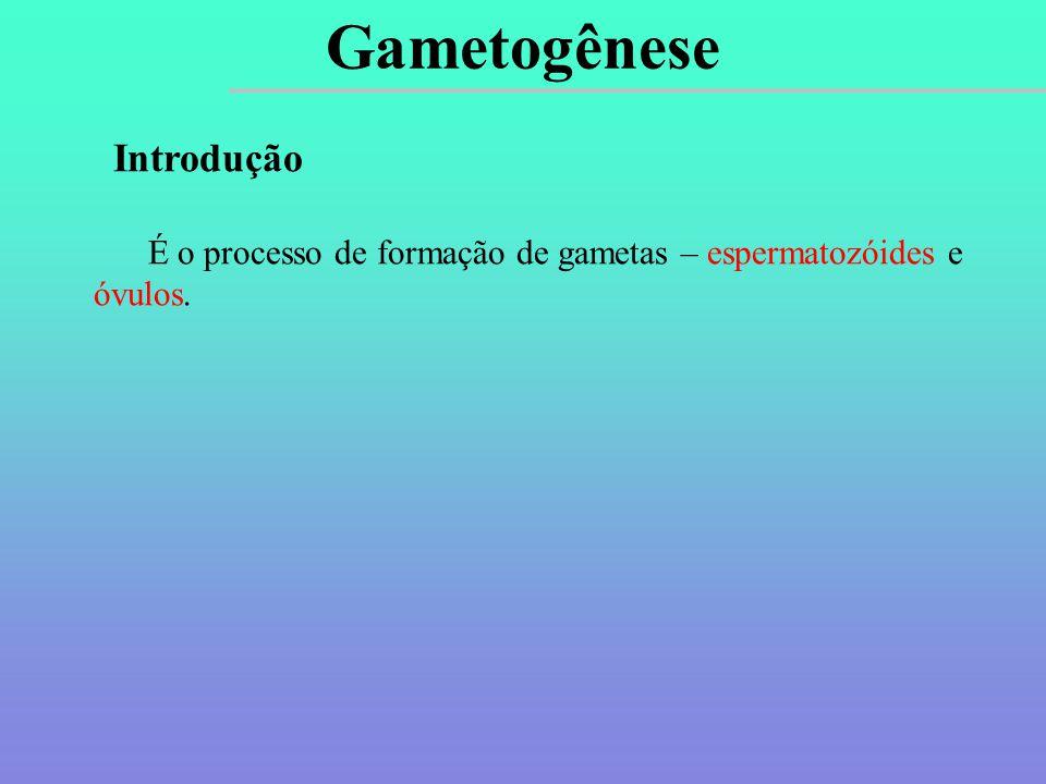 Introdução É o processo de formação de gametas – espermatozóides e óvulos. Gametogênese