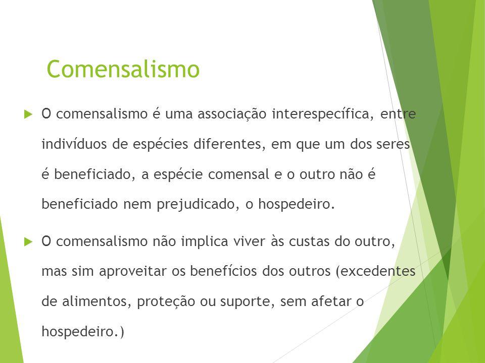 Comensalismo  O comensalismo é uma associação interespecífica, entre indivíduos de espécies diferentes, em que um dos seres é beneficiado, a espécie
