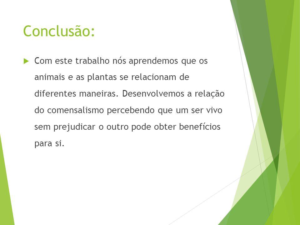 Conclusão:  Com este trabalho nós aprendemos que os animais e as plantas se relacionam de diferentes maneiras. Desenvolvemos a relação do comensalism